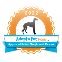 Italian Greyhound Badge