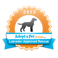 Labrador Retriever Badge